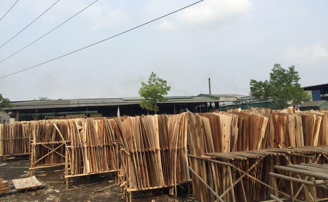 veneer to produce packing plywood