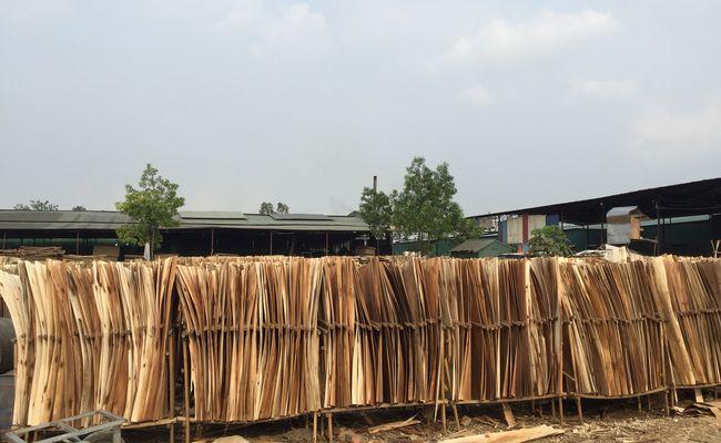 veneer to produce plywood